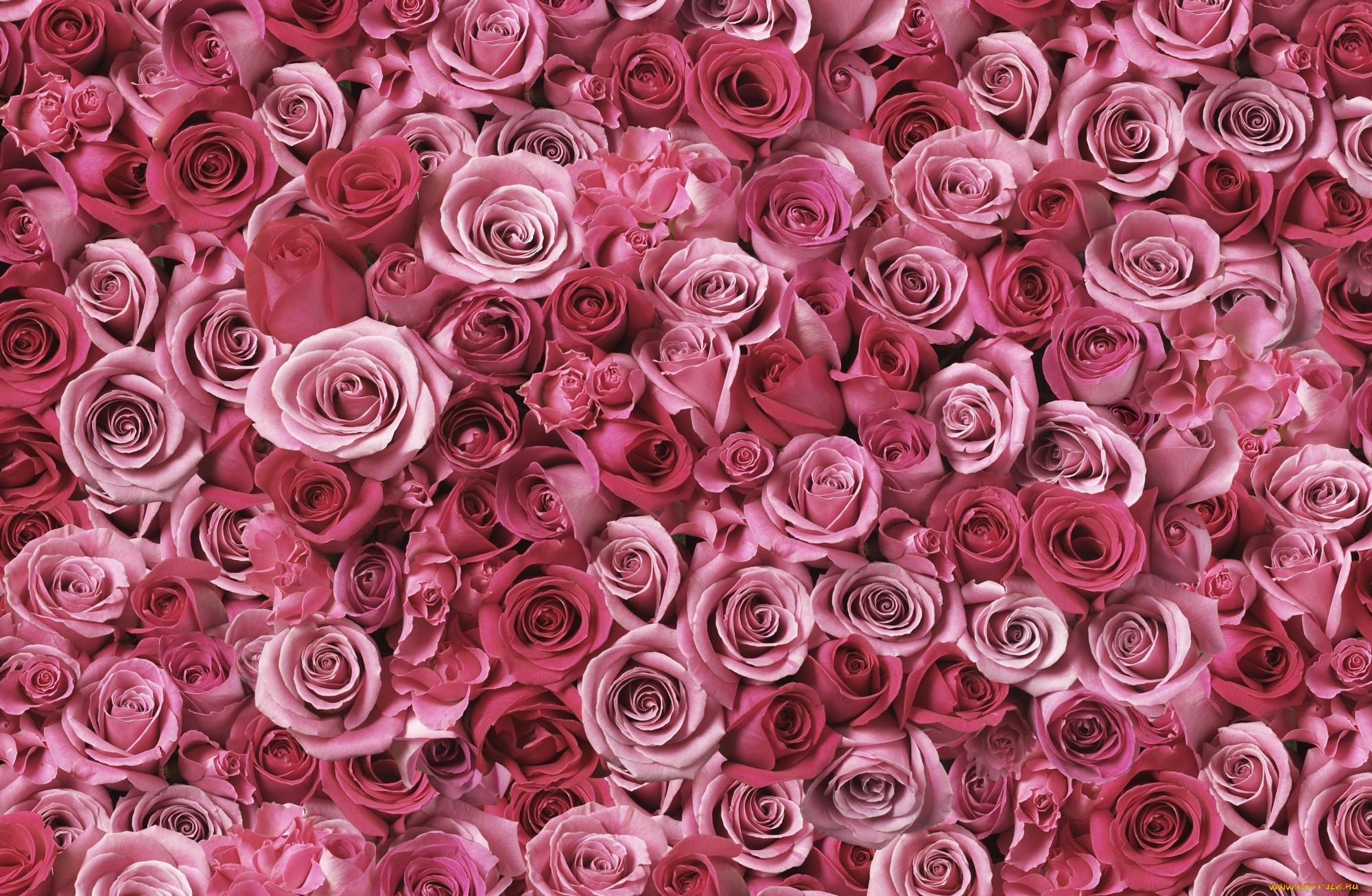 картинку картинки для ватсапа цветы новомодные тур улицам саяногорска
